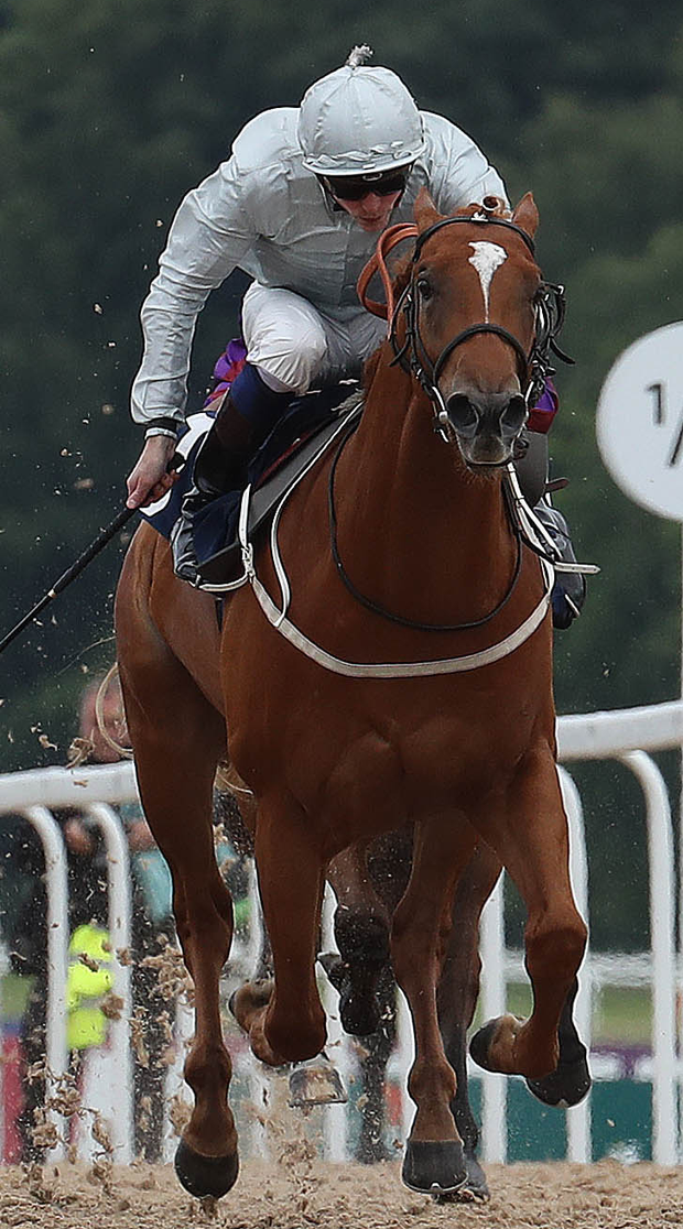 Looking good: Poet's Society can deliver in Lingfield today