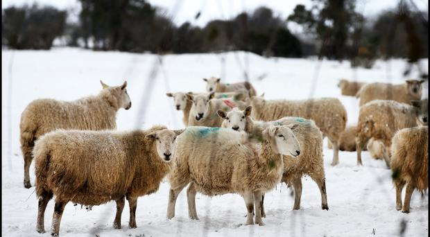 The 'Beast from the East' was public relations gold for agri and food sectors