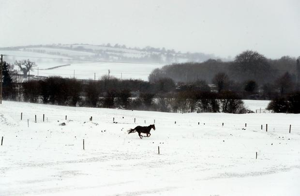 A horses in snow covered field in Athy, Co Kildare as the severe weather conditions continue. Niall Carson/PA Wire