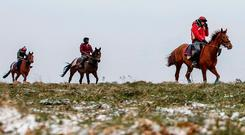 Some of trainer Nick Gifford's charges on the Findon gallops in West Sussex yesterday. Photo by Alan Crowhurst/Getty Images