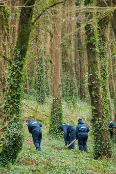 Gardaí work their way through woods at the 40-acre site of the search for Tina Satchwell at Mitchell's Wood, outside Castlemartyr, east Cork. Photo: Daragh McSweeney/Provision