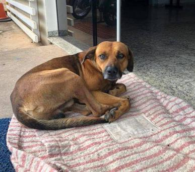 The dog has remained in front of the hospital for four months Picture: Facebook