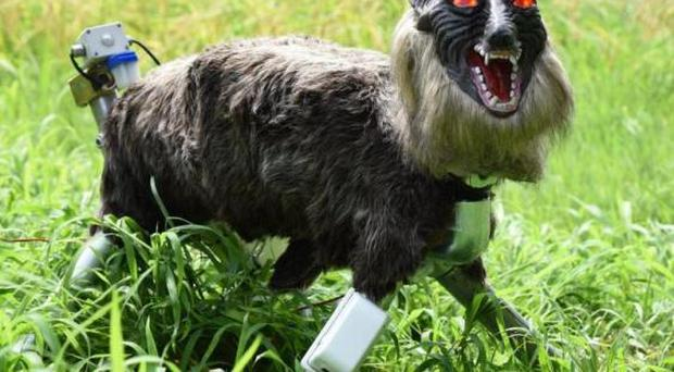 Robotic 'super monster wolf' deployed to protect Japan's crops from wild boars