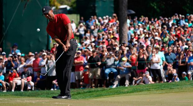 Tiger Woods chips onto the fourth in yesterday's Valspar Championship where he missed out on play-off after a final round 70 to leave him nine under. Photo credit: Jasen Vinlove/USA Today Sports
