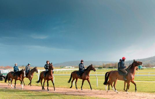 Willie Mullins's horses on the gallops at Cheltenham Racecourse on a preview day ahead of the festival meeting. Photo: PA