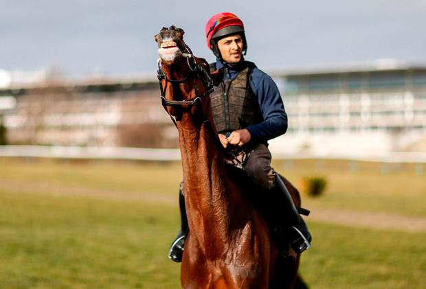 Footpad, with Syed Raza up, on the gallops at Cheltenham. Photo: Alan Crowhurst/Getty Images