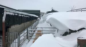 The scene on John Fagan's farm in Westmeath during Storm Emma