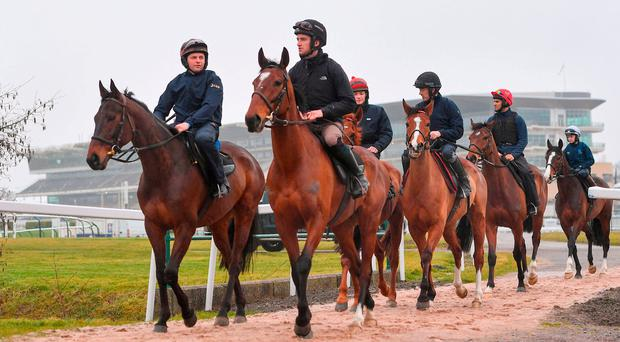 Getabird, with Sonny Carey up, and Wicklow Brave, with Patrick Mullins on board, on the gallops at Prestbury Park yesterday. Photo: Ramsey Cardy/Sportsfile