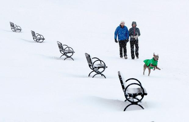Levon, a Weimaraner, frolics in the snow ahead of Jacob Markowitz and Emily Wells, as they walk on the Eastern Promenade park during a nor'easter, Thursday, March 8, 2018, in Portland, Maine. (AP Photo/Robert F. Bukaty)