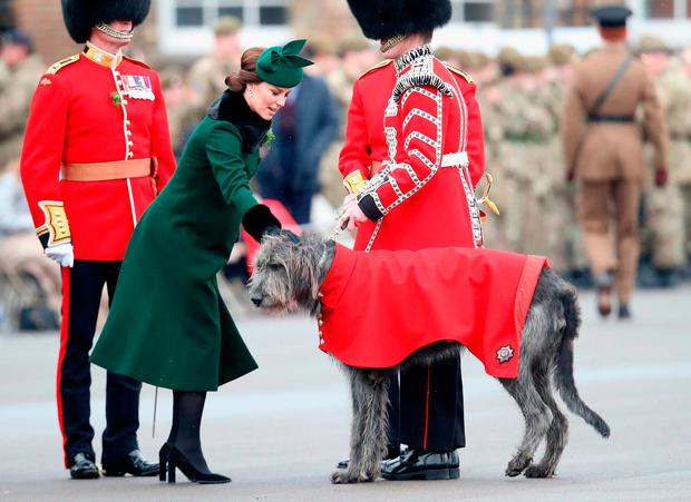 Catherine, Duchess of Cambridge attaches a sprig of shamrock to the regimental mascot, the Irish wolfhound 'Donal' during the annual Irish Guards St Patrick's Day Parade at Cavalry Barracks on March 17, 2018 in Hounslow, England. (Photo by Chris Jackson/Getty Images)