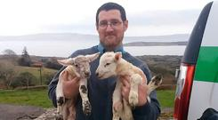 Postman Séamus Spencer with the two lambs he helped deliver in Castletownbere, Co Cork, yesterday