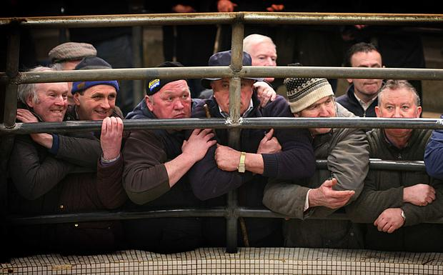 Castlerea Mart Crush Bars. Photo Brian Farrell