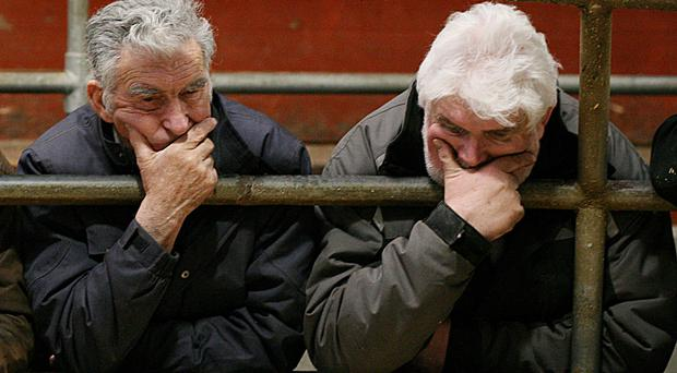 GALLERY: Reality bites as price gains reversed in bullock trade (trade back €60-80/head)