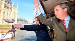 Nigel Farage and the founder of Fishing for Leave, Aaron Brown, symbolically dump fish into the River Thames next to the Houses of Parliament. Photo: Toby Melville/Reuters
