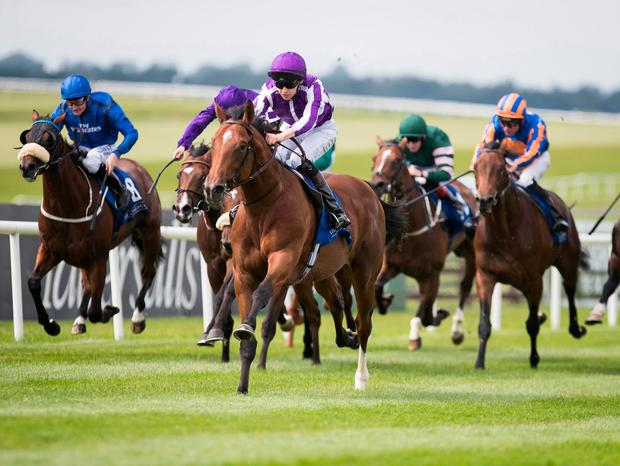 Saxon Warrior, with Donnacha O'Brien up, on the way to winning at The Curragh last August. Photo: Patrick McCann