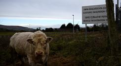A bull stands in a field with a disused Customs Facilitation Office in the background on the border in Carrickcarnon, Ireland, December 7, 2017. REUTERS/Clodagh Kilcoyne