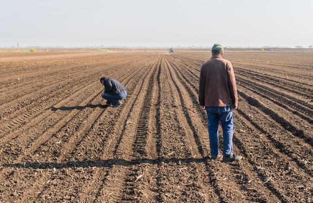 Farmers analyze soya seed after sowing crops at agricultural field in spring