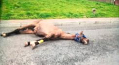 Horrified locals reported the incident to the Irish Society for the Prevention of Cruelty to Animals (ISPCA) and the Gardaí