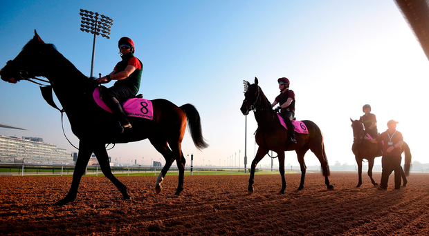 The Aidan O'Brien-trained pair Threeandfourpence (left) and Seahenge in Meydan after a morning gallop ahead of tomorrow's Dubai World Cup fixture. Photo: Tom Dulat/Getty Images