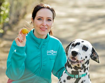 Undated handout photo issued by PDSA of vet Gemma Hepner with Pongo the Dalmatian, who needed a life-saving operation after swallowing a golf ball on a walk close to a course. PRESS ASSOCIATION Photo. Issue date: Wednesday April 4, 2018. Pongo was taken to PDSA Vets in Edinburgh with a urine infection when an x-ray revealed a bigger problem in his stomach. PDSA/PA Wire