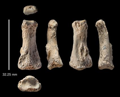 Fossil finger bone could challenge modern migration theory