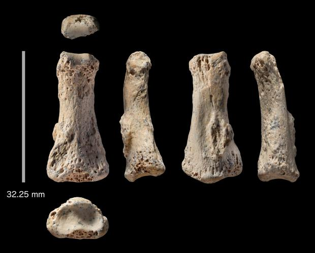 Fossil finger bones of Homo sapiens from the Al Wusta site, Saudi Arabia. Photo: Getty Images