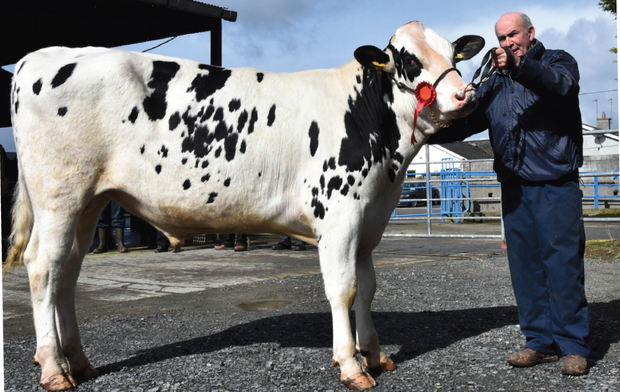 Tom Kelly of Ballymakenny Road, Drogheda, Co Louth, with his prizewinning bull, Monamore Dresden — sold for €3,000