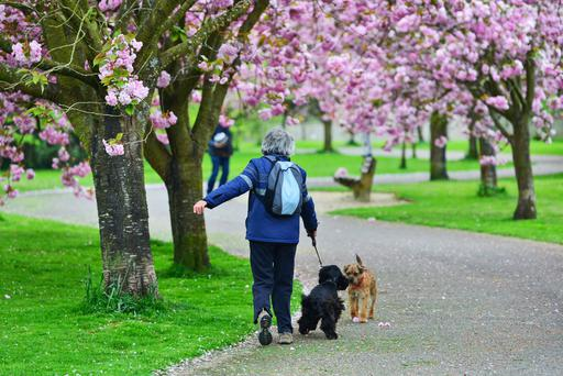 Is spring finally set to arrive in Ireland? Stock photo