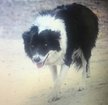 Patch has been found safe and well.