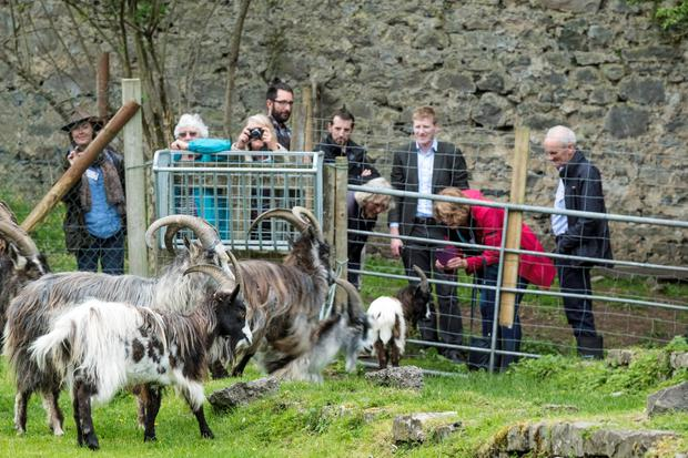 The Irish Rare Breeds Conference takes place on May 24-26 in Mayo.