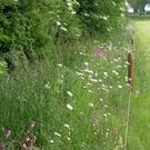 Field margins that are allowed to flower and form a dense vegetation provide a habitat for flowering plants, as well as cover and food for farmland wildlife such as birds and bumblebees.