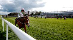 NAAS, IRELAND - APRIL 26: David Mullins riding Faugheen clear the last to win The Ladbrokes Champion Stayers Hurdle at Punchestown racecourse on April 26, 2018 in Naas, Ireland. (Photo by Alan Crowhurst/Getty Images)