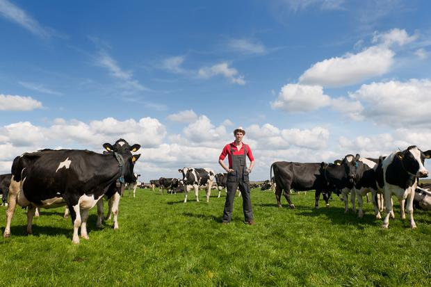 young farmer proud in field with livestock cows
