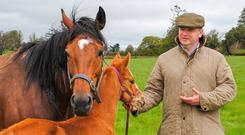 Mark Molloy pictured with one of his thoroughbred mares and her young foal