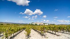 Vineyards in Penedes zone, Catalonia, Spain
