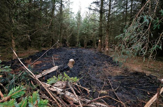 The site where the wreckage was found this morning of the aircraft which crashed in dense forest on the outskirts of Clonbuloge, Co. Offaly yesterday killing the pitot and a seven year old boy..Picture Colin Keegan, Collins Dublin.