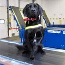 Detector dog Stella helped to sniff out the cannabis