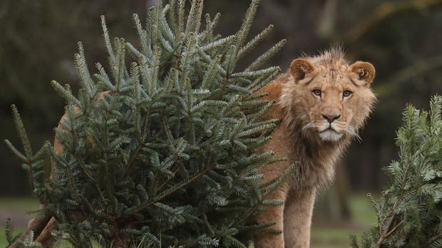 An unspecified number of big cats escaped (Andrew Milligan/PA)