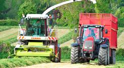 If yields are reasonable, don't delay cutting silage.