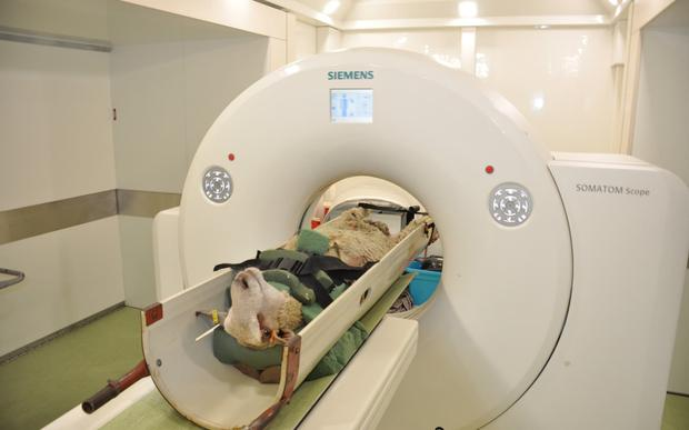 Researchers are testing whether CT scanners can determine which animals will produce the best meat