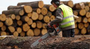 An employee works on chopped oak trunks at the Margaritelli Fontaines sawmill in Burgundy, France, April 10, 2018. Picture taken April 10, 2018. REUTERS/Charles Platiau