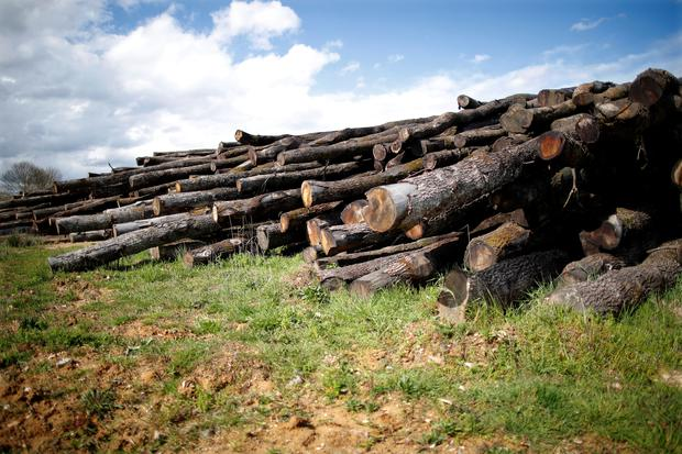 Chopped oak trunks are seen at the Margaritelli Fontaines sawmill in Burgundy, France, April 10, 2018. Picture taken April 10, 2018. REUTERS/Charles Platiau