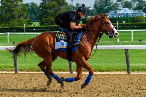 Justify trains on the main track in preparation for the 150th running of the Belmont Stakes at Belmont Park. Photo: Dennis Schneidler/USA Today