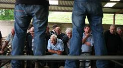 9/6/2018 Dowra Mart Keeping an eye on auctioneer Tommy McGovern. Photo Brian Farrell