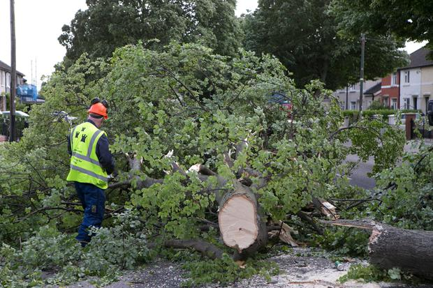 Dublin City Council workers busy moving a tree on Clogher Road, Crumlin which fell overnight due to high winds. Photo: Kyran O'Brien
