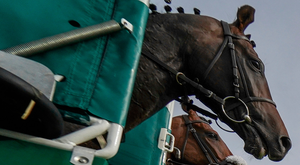 'Horses break from the stalls during yesterday's racing at Sandown' Photo: Alan Crowhurst/Getty Images