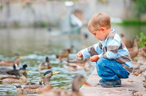 Don't feed the ducks white bread — give them 'duck seed' instead