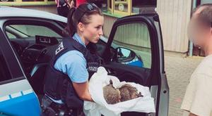 The two drunk hedgehogs were taken in for the night. PIC: Polizei Tehuringen/Facebook