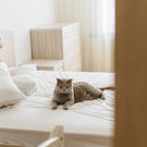 It doesn't suit for one of us to stay sleeping with him in his bed. Photo: Stock photo