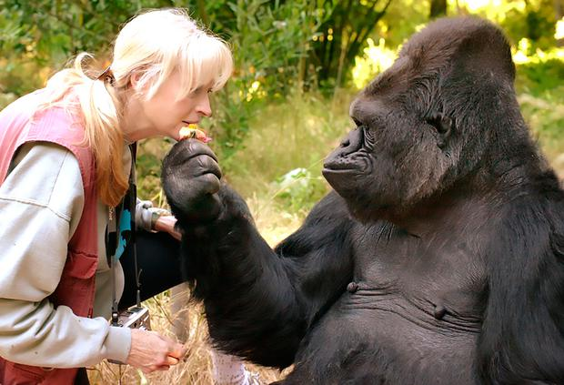 Koko and her lifelong teacher and friend Dr. Penny Patterson AFP PHOTO/ The Gorilla Foundation